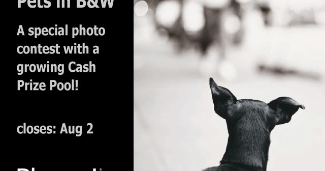 Pets in B&W photo contest
