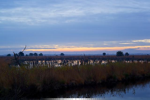 Rehdener Geestmoor - Swamp Rehdener Geestmoor @ sunrise