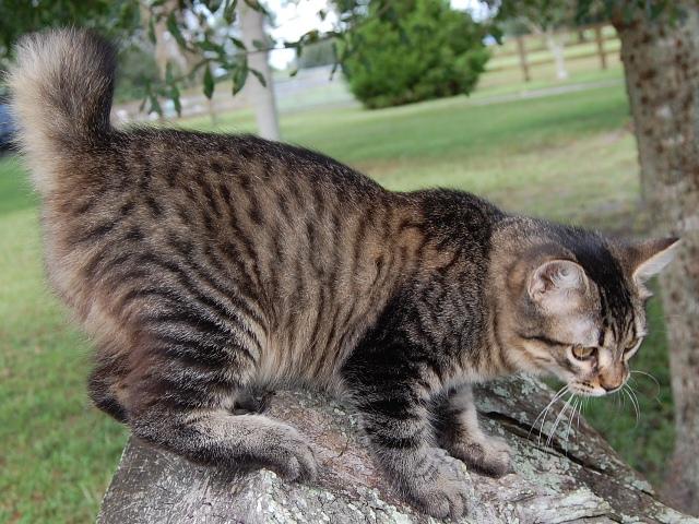 wharf cat records
