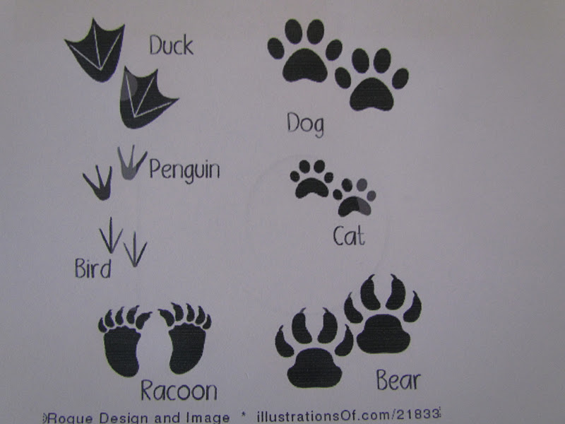 babies, toddlers, and preschoolers, oh my!: Animal Tracks