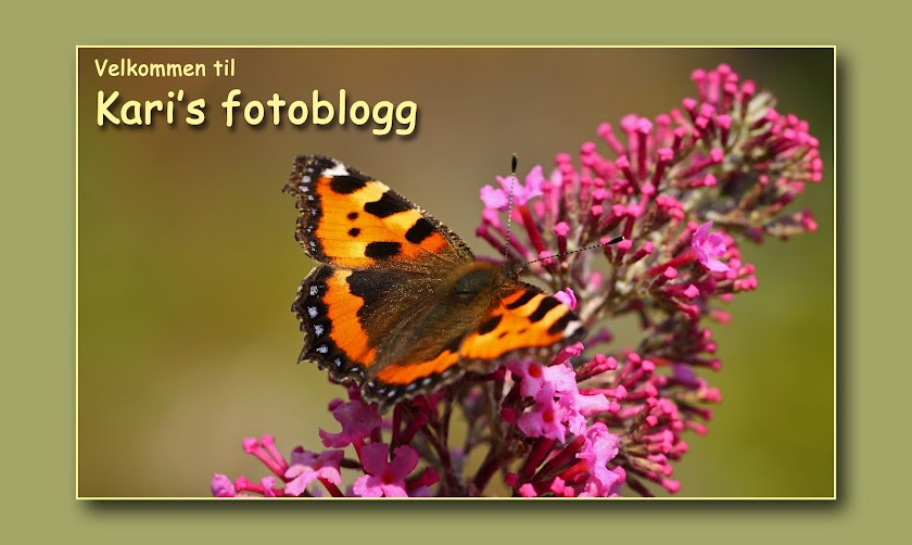 Karis fotoblogg