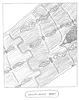 picture of cells that Shawn drew for his class