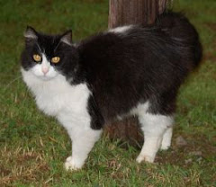 10/12/12 Grafton, WV Taylor -County Humane Society