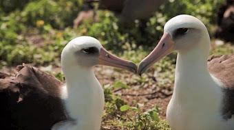 -Islas Midway donde cada año 200.000 aves mueren por el plastico.
