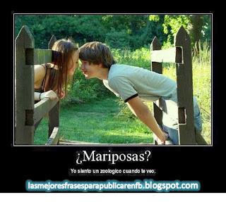 Frases De Amor: Mariposas Yo Siento Un Zoológico Cuando Te Veo