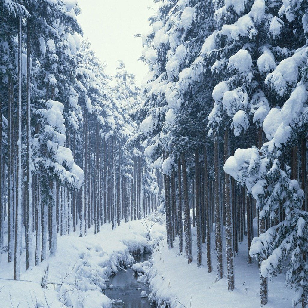 free wallpapers for ipad winter forest river
