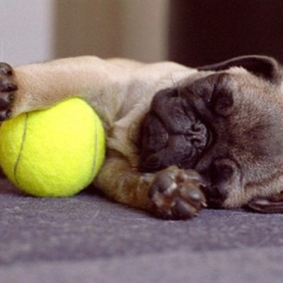 How much does a Pug sleeps?