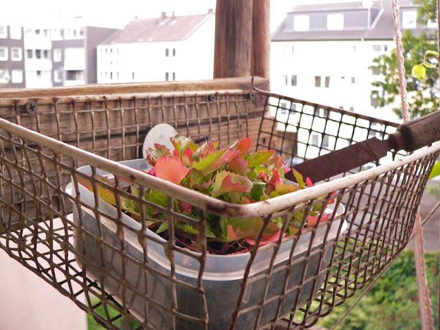 Balkon Blumen Gemüse Selbstversorger Pflanzen Innenstadt Oase Sommer Erdbeeren
