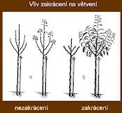 Jak a kdy prostříhat ovocné stromy?