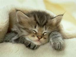 3 Alimentos para el buen dormir