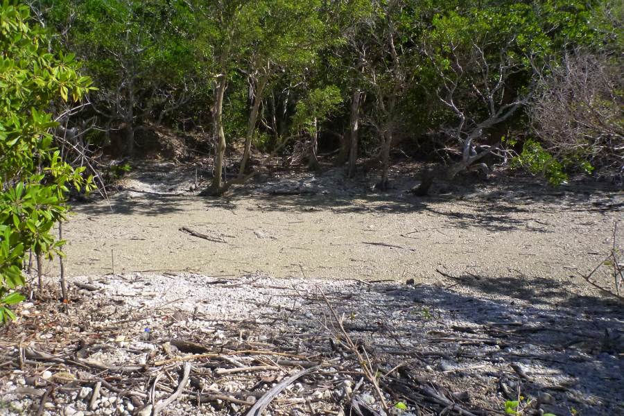 pumice in north Queensland near Cooktown