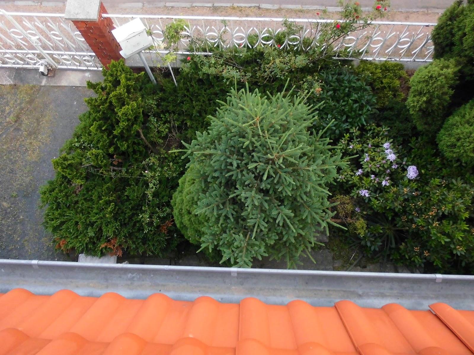 Schön Kleiner Garten Ohne Rasen Design