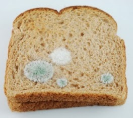 Penyebab Roti Berjamur