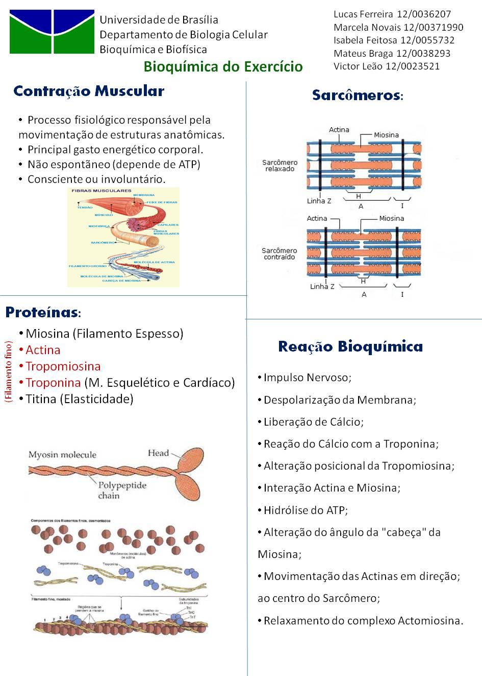 painelbiobioexecicio+v2+(6).jpg