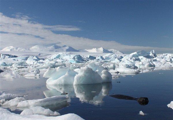 Laut Es Antartika Meleleh Karena Perubahan Iklim