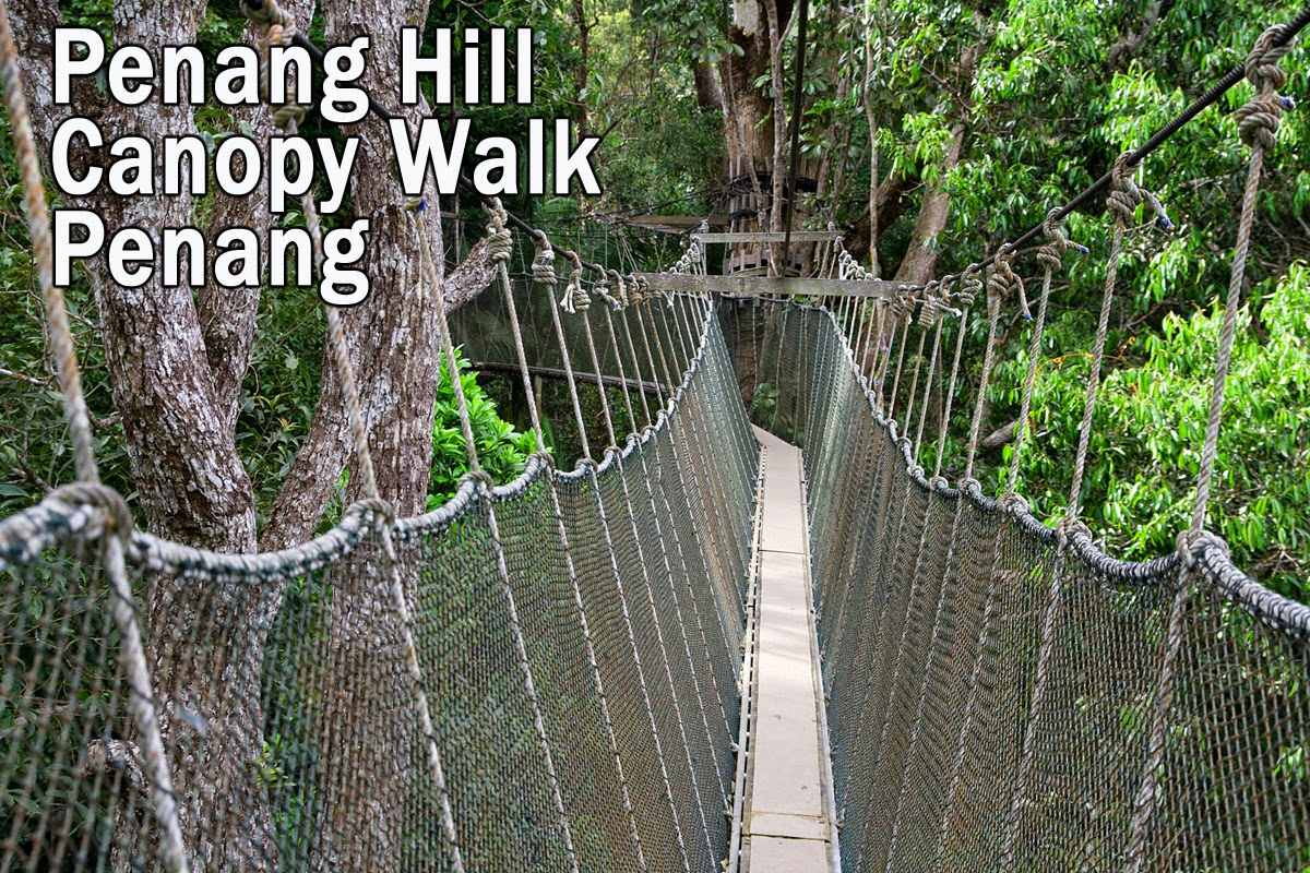 Penang Hill Tree Top Walk