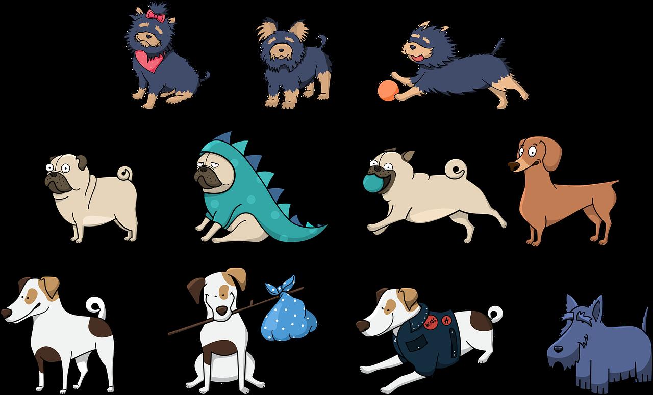 Mascotas rescatadas