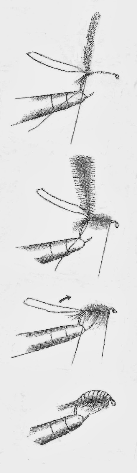 Four drawings showing how to tie a scud or shrimp fly.