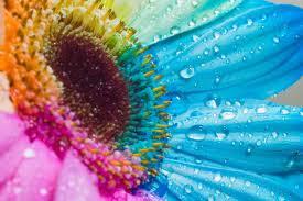 สุดยอดภาพดอกไม้สวยงาม 25 best flower pictures
