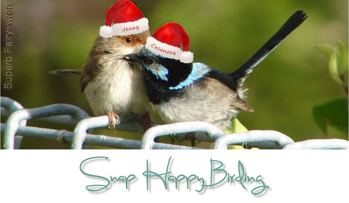 Snap Happy Birding