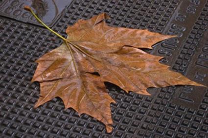 """Cette image montre une feuille de platane humide et marron posee a plat sur une surface grise et non uniforme mais faite de multiples petits reliefs carres et qui semble faite de metal. On suppose donc que la feuille git sur une sorte de plaque d'egout. La feuille occupe la quasi-totalite de l'image et n'est nullement degradee, elle repose bien a plat au sol comme dans un herbier. Sa couleur marron l'assimile clairement a une feuille morte et l'humidite laisse supposer qu'il pleut. Le contraste entre le vegetal et le metal est saisissant : en extrapolant on peut dire que la civilisation, representee par la plaque d'egout en metal, detruit la vie que symbolise la feuille, morte puisque fanee. toutefois le Marginal Magnifique a surtout choisi son image pour son caractere deprimant qui renvoie clairement a l'automne, saison melancolique par excellence. Cette superbe image tres suggestive malgre sa simplicite illustre ainsi a merveille le poeme du Marginal Magnifique intitule """"Spleen"""" dans lequel le grand poete evoque la souffrance existentielle : l'etre humain a conscience de la vanite de toutes choses mais il lui faut pourtant occuper son temps pour ne pas s'ennuyer et surtout pour oublier sa condition de mortel. Le poete evoque ainsi plusieurs aspects des loisirs humains : fête, nourriture, nature, art et mode, et insiste sur l'amour et l'accouplement qui meme ne le bernent plus. Au final l'interrogation reste entiere : que nous reste-t-il ? Encore un immense poete, saugrenu dans ses evocations, mais riche de sens dans sa simplicité."""