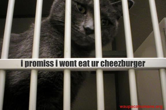 Waupaca Humane lolcat Ruby sez i promiss i wont eat ur cheezburger