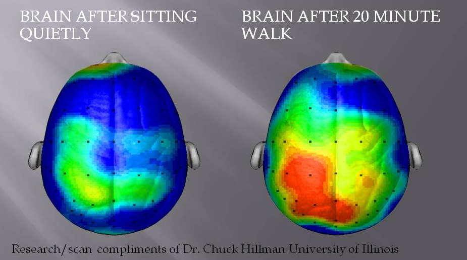 Brain after sitting quietly and after 20 minute walk - 10 Simple Things You Can Do Today That Will Make You Happier, Backed By Science
