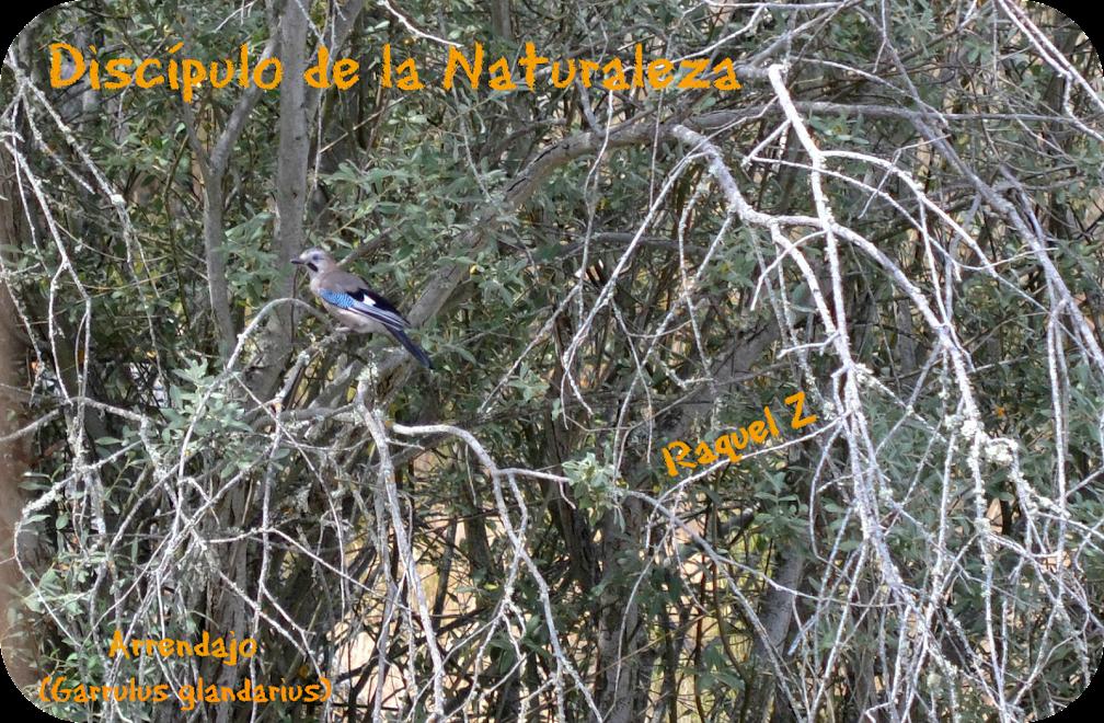 Discípulo de la naturaleza