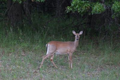 alert doe checking for breakfast