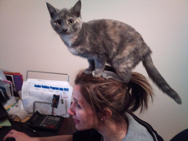 funny cat pictures, cat on head
