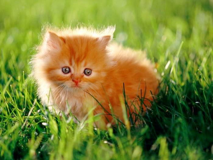 Hình ảnh động vật dễ thương kute