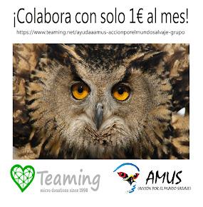 Colabora con AMUS!!!