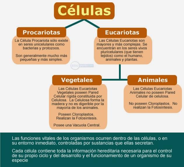 celula, mapa, concepto, conceptual, eucariota, procariota, animal, vegetal