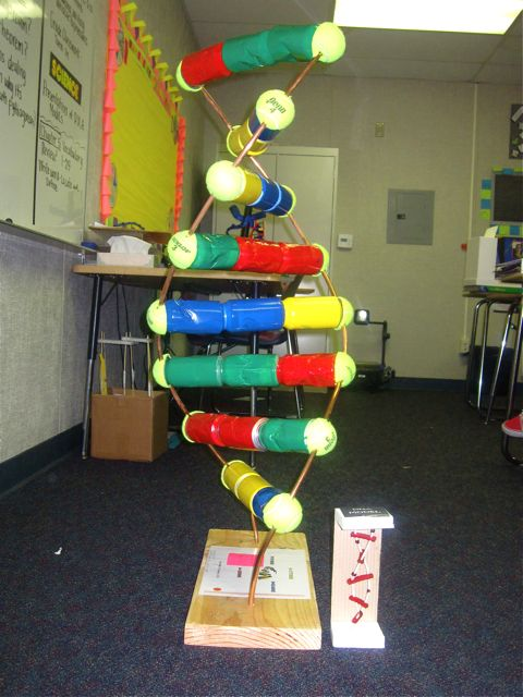 dna project model