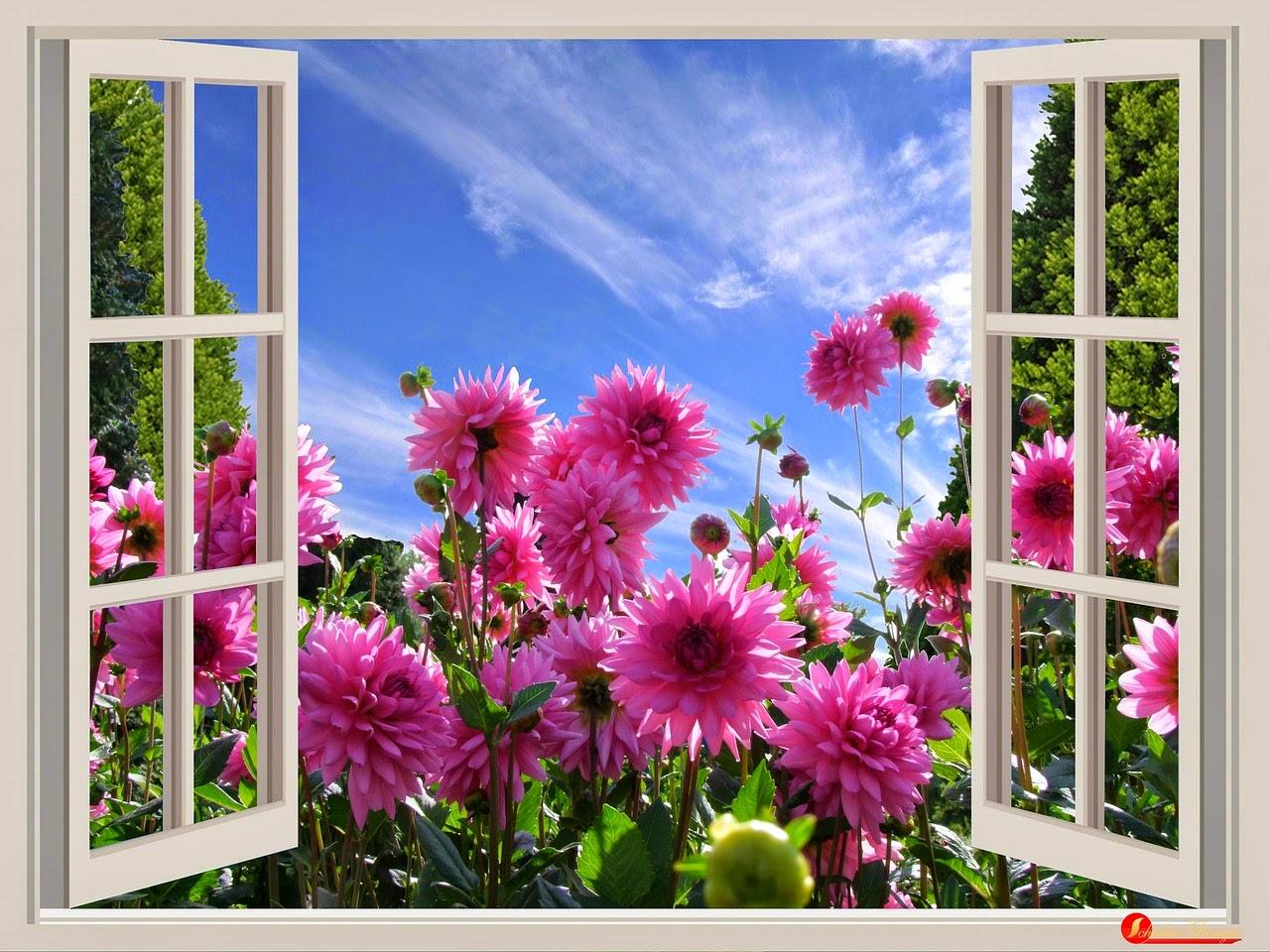 أجمل الصور لصباح الخير والورد جميلة ورائعة