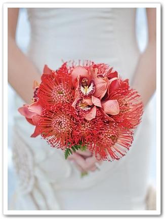 protea, protea pin cushion, protea nåldyna,