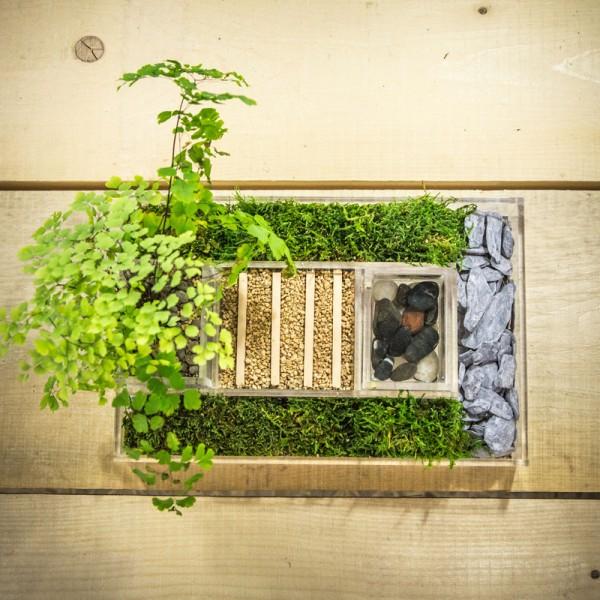 vaso design composizione piante verdi