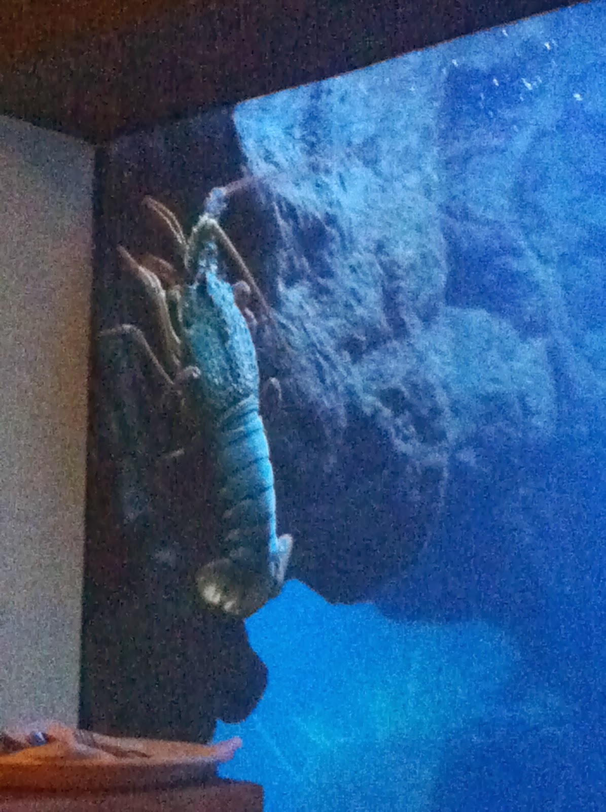 A lobster in the aquarium.