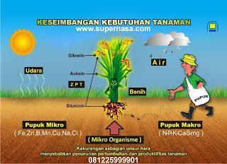 www.supernasa.com Pupuk Orgsnik