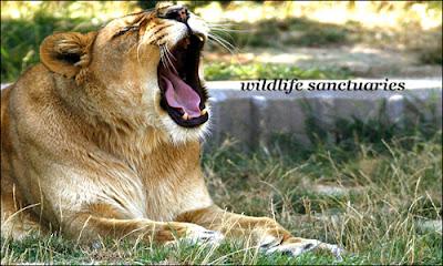 several wildlife sanctuaries in india