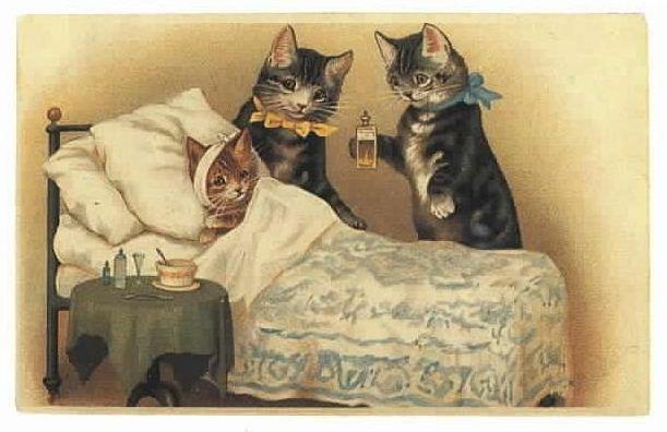 Tips Memelihara Kucing Arifuddin S Kep