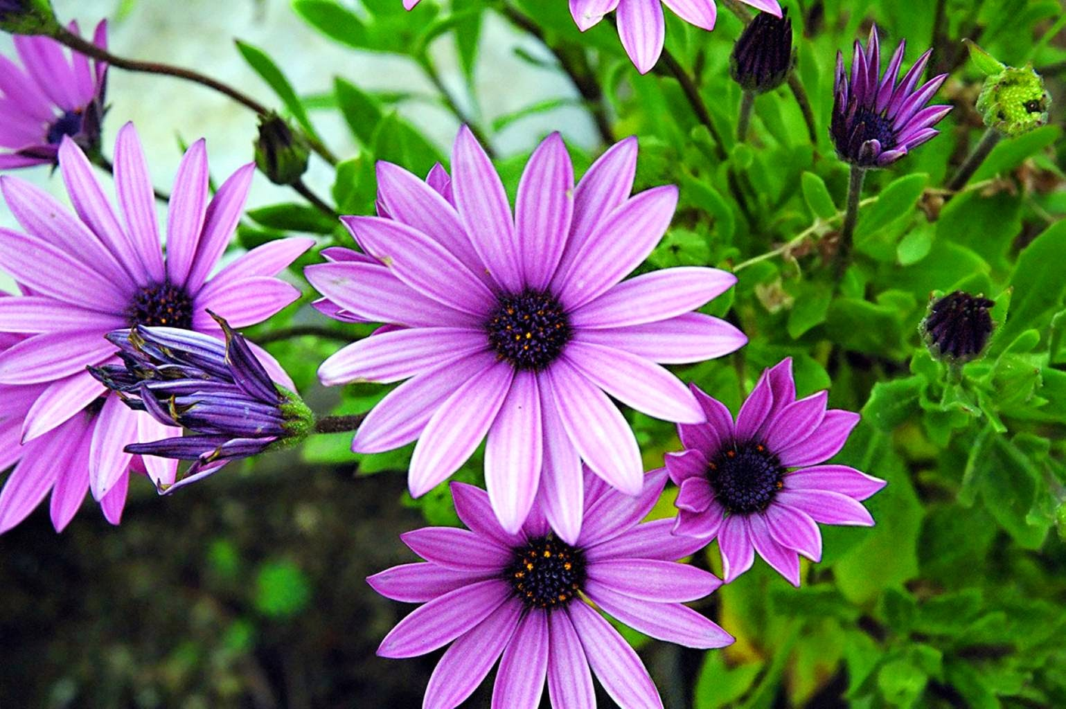 Spring Flowers Pictures 2015
