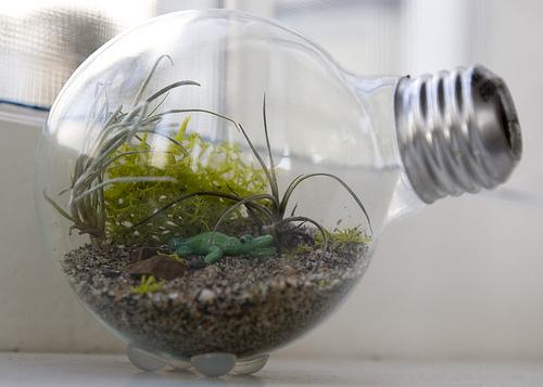Como fazer um jardim dentro de uma lâmpada