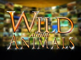 Wild About Animals
