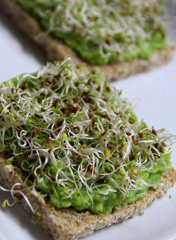 follow the vegan way avocado alfalfa sandwich testbericht. Black Bedroom Furniture Sets. Home Design Ideas