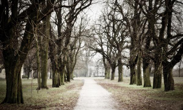 Park przy Pałacu Potockich. Międzyrzec Podlaski