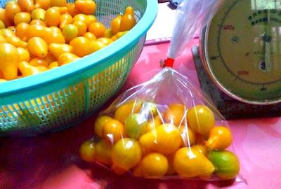 黄色い涙型のミニトマト