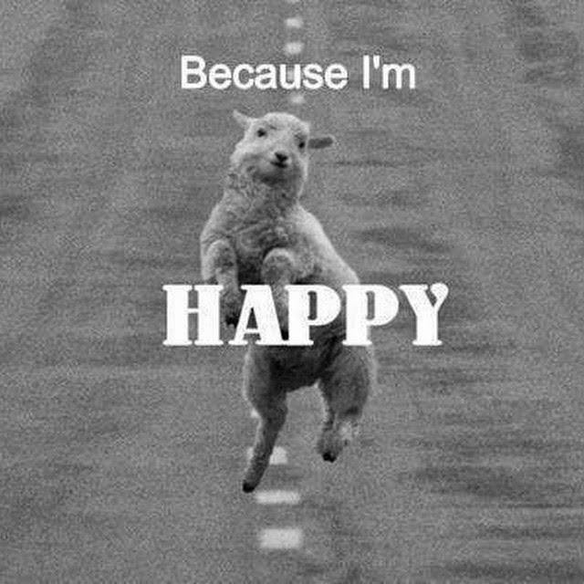 """""""Because I'm HAPPY"""" Picture of a goat jumping in the middle of a road."""