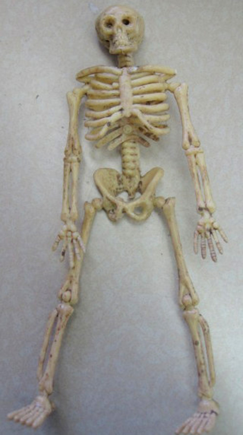 Skeleton for Mummy Project