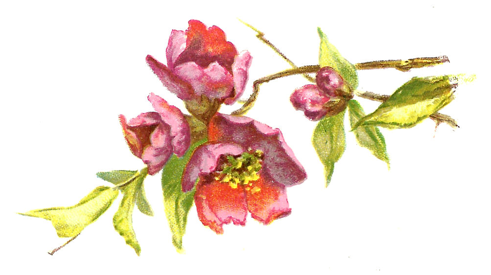 Free Vintage Flower Clip Art Burgundy Flowers With Leaves On Branch
